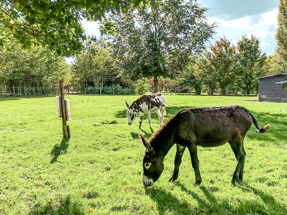 versailles-donkeys.jpg