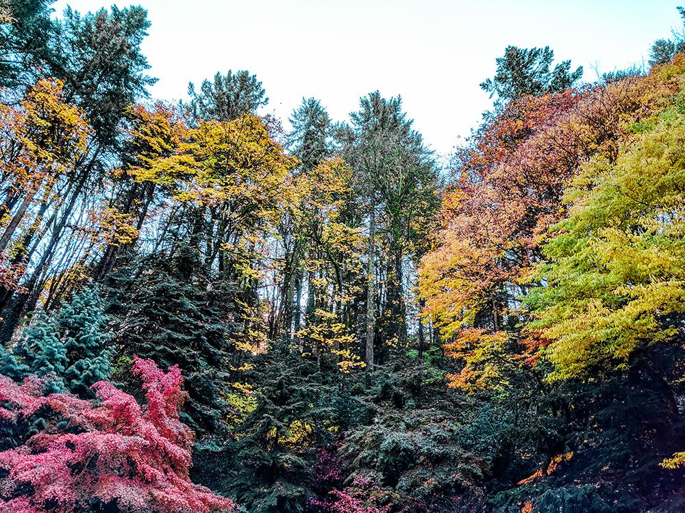 fall-treeline.jpg
