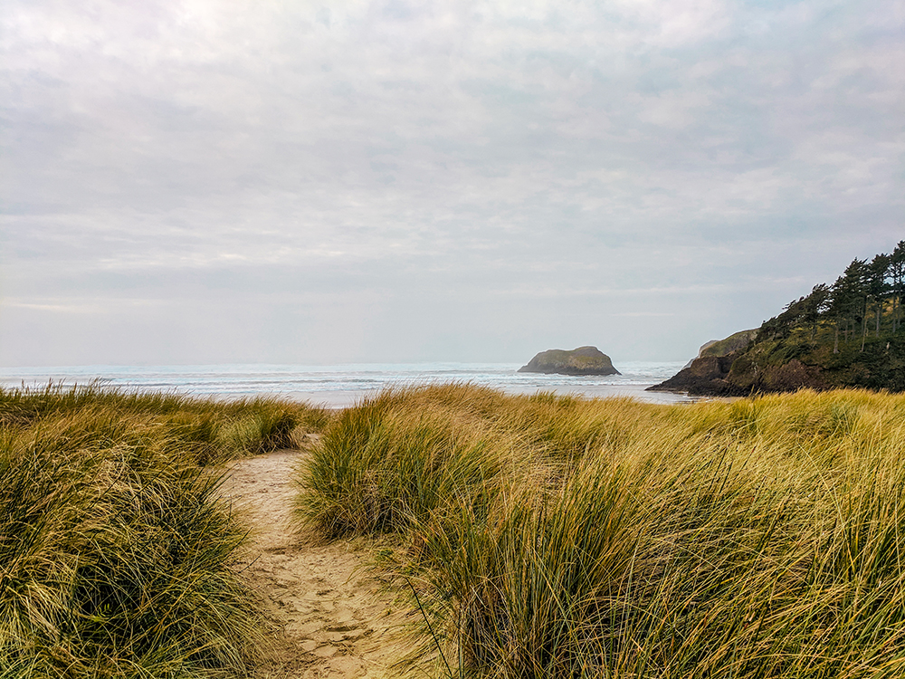 ecola-beach-grass.jpg