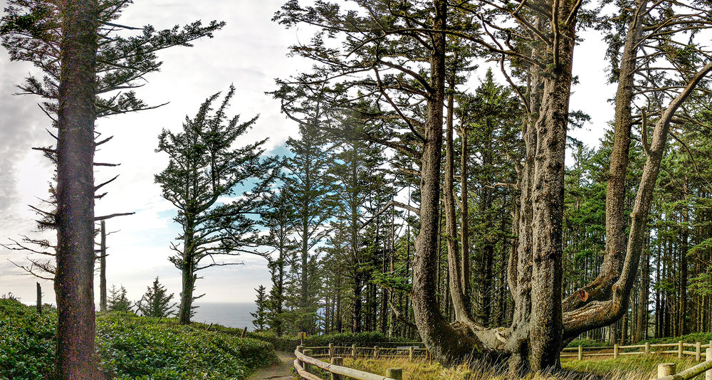 octopus-tree-pano.jpg