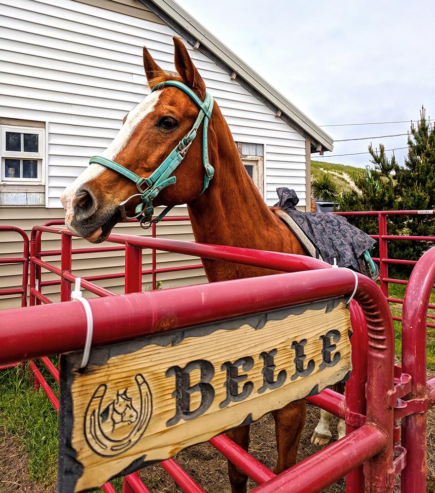 Green-Acres-Beach-Rides-Belle.jpg