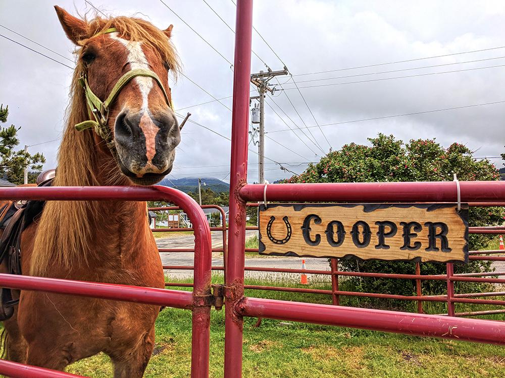 Green-Acres-Beach-Rides-Cooper.jpg