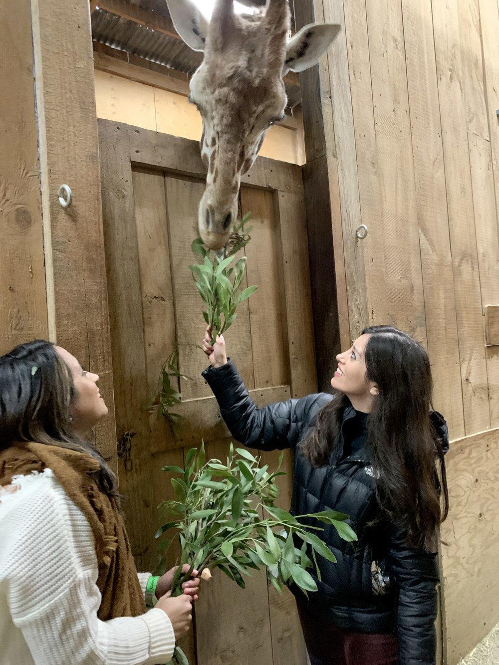 Vivian and I feeding giraffes