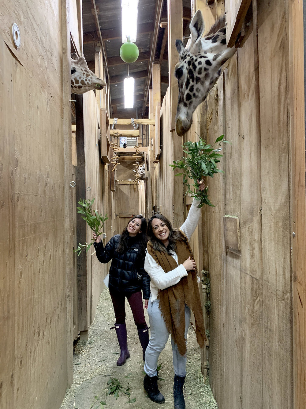 Vivian and I smiling with giraffes