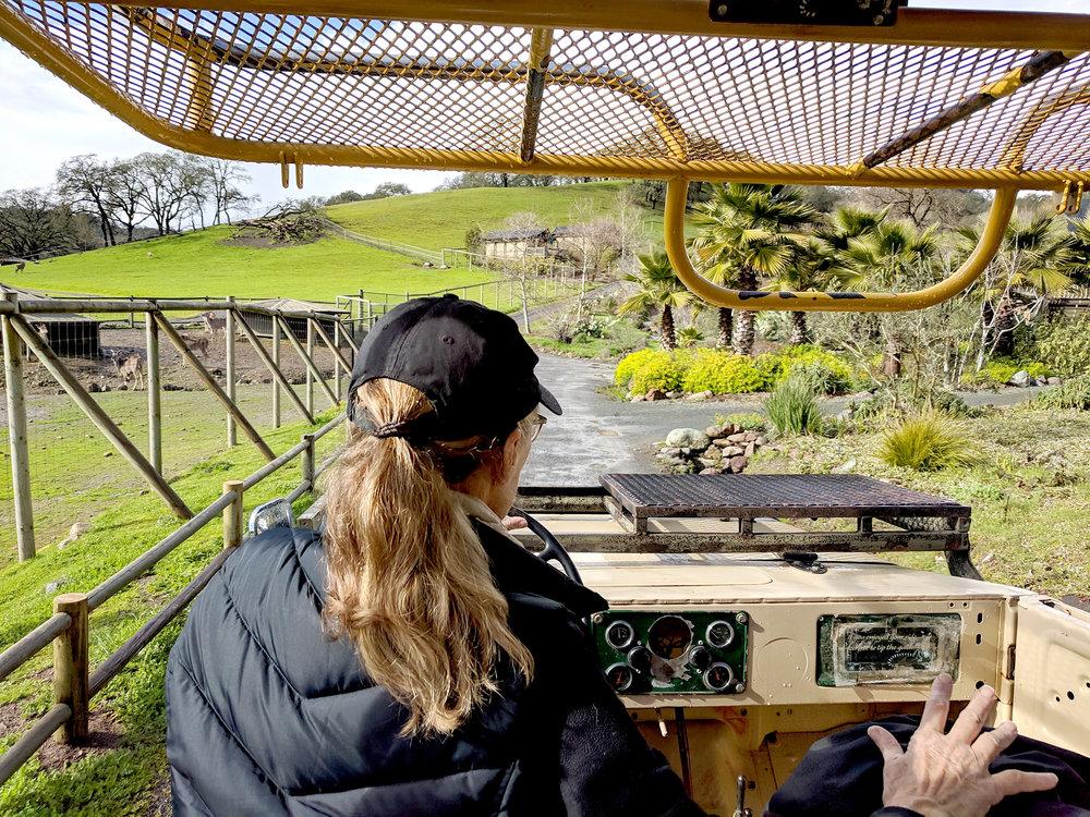 Safari West vehicle tour