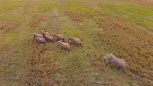 The herd of 8 elephant on their spree after breaching the boundaries of the Dinokeng Game Reserve. Charles, the oldest bull of the reserve and the main instigator of the group, is at the back of the herd. An ERP collar was recently placed on him and was very useful in locating the elephant and monitoring their 'walk' back.
