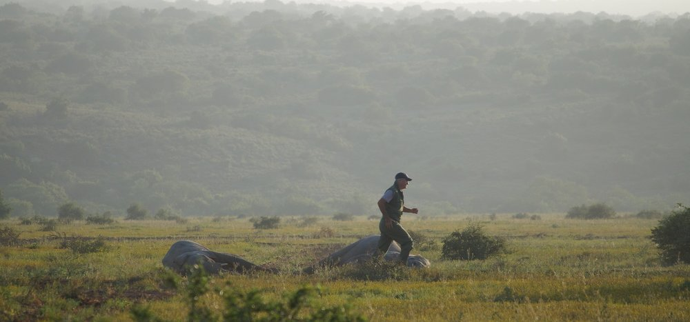 Kester Vickery busy on the ground checking on the darted elephants. Photo: Ida Hansen