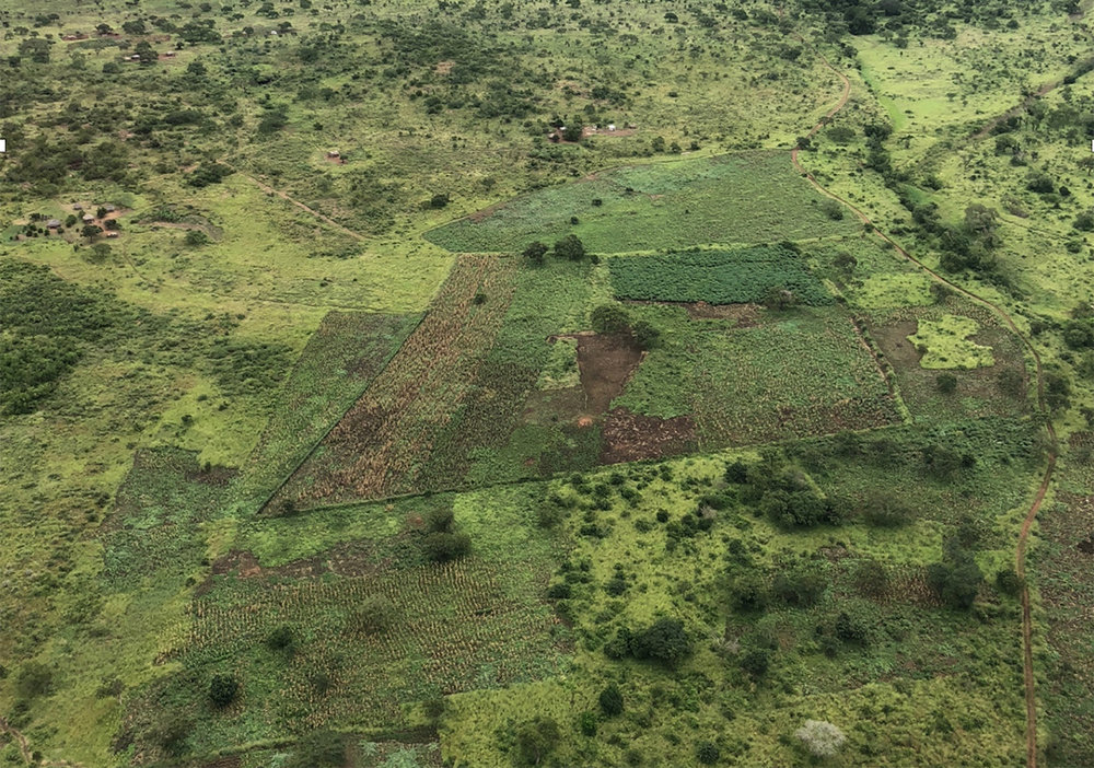 This picture shows the problem of farming and wilderness intersecting