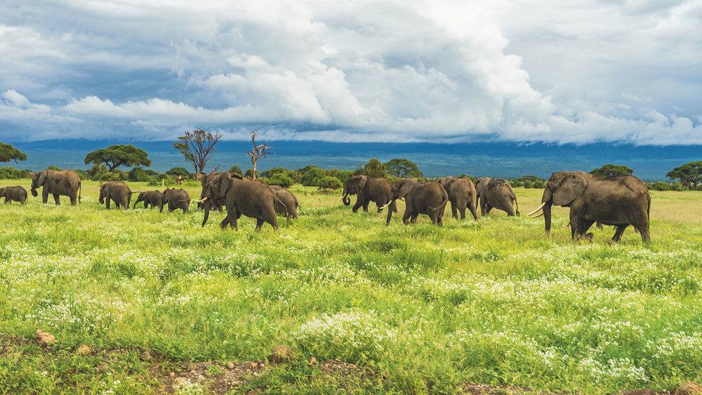 911-elephant-project.jpg