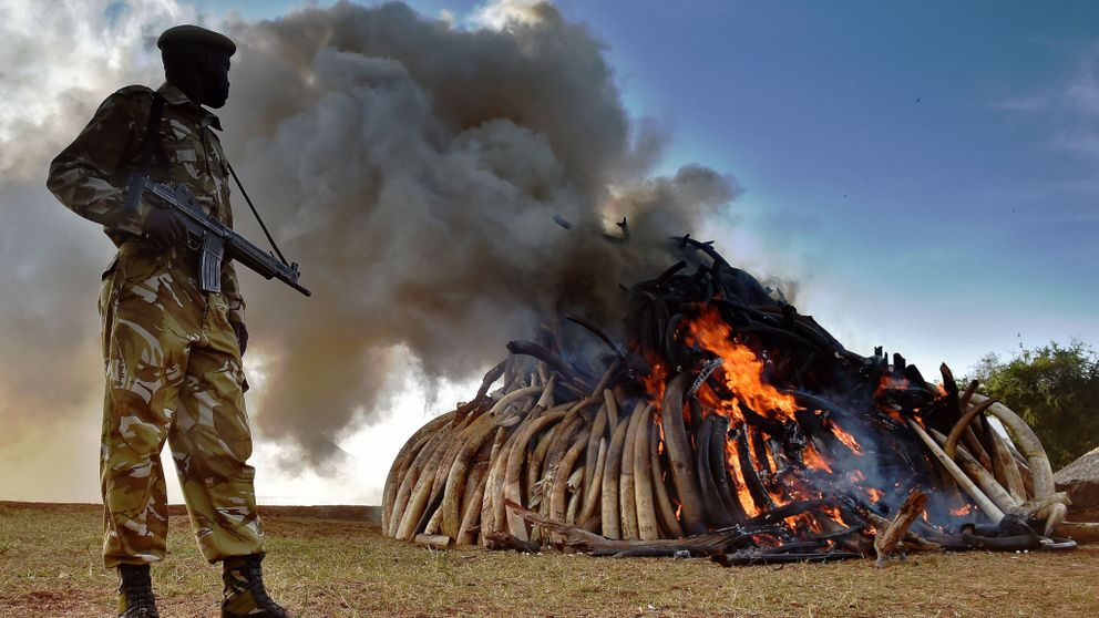 The is strong demand for ivory in many parts of the world