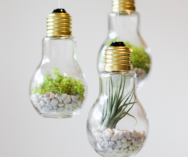 light-bulb-terrariums1.png