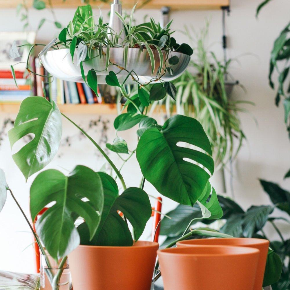 lillith-plant-shop-1.jpeg