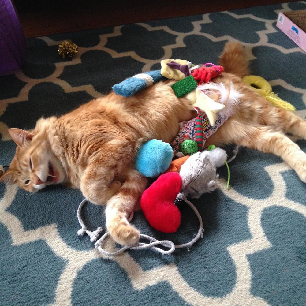 Our cat Bob sometimes demands we put all of his toys on him. He will lay like this for hours.
