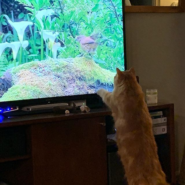 These cat entertainment YouTube channels will be the end of the tv but they love them so much.
