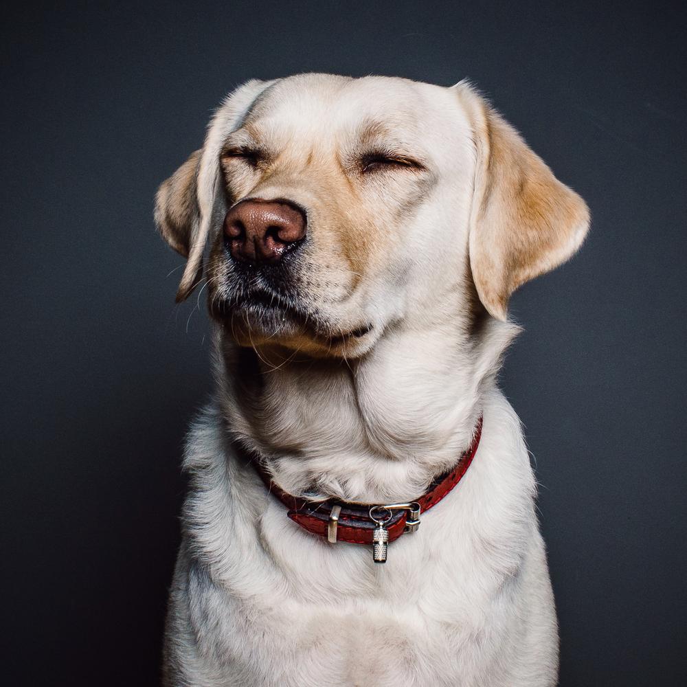confused dog.jpg