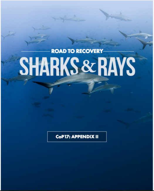 BROCHURE - Road to Recovery: Sharks & Rays, CoP17 Appendix II (Pew Charitable Trusts)
