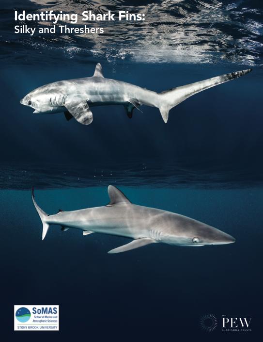 Shark Fin ID Guide: English
