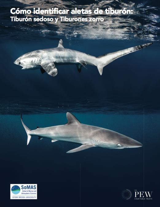 Shark Fin ID Guide: Spanish