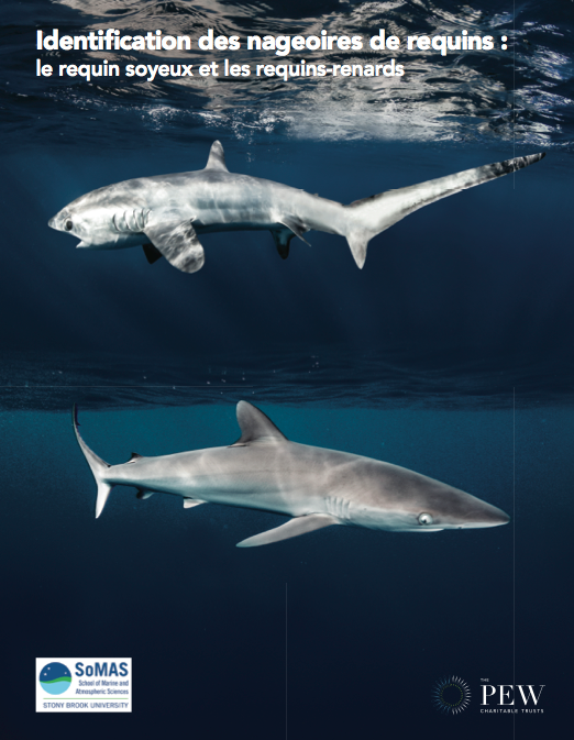 Shark Fin ID Guide: French