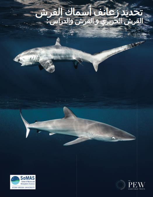 Shark Fin ID Guide: Arabic