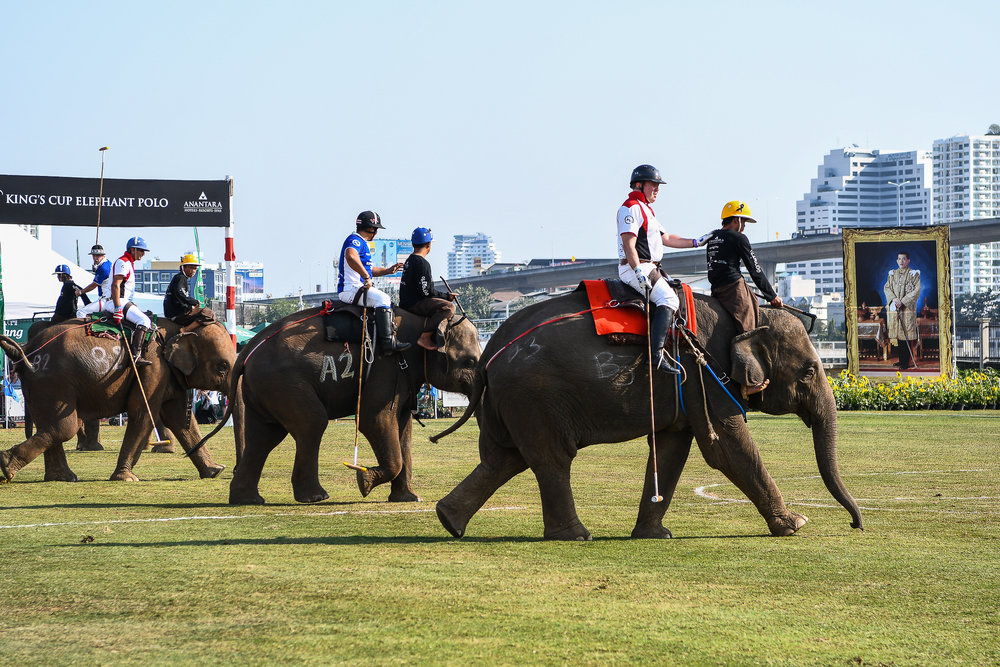 BANGKOK, THAILAND - MARCH 12: Let the Final Game begin as the elephants and players take their position at the 2017 King's Cup Elephant Polo on March 12, 2017 at Anantara Riverside Bangkok Resort, Bangkok, Thailand. (Photo by: Naratip Srisupab/Thailand Photo SEALs Sports Photography)