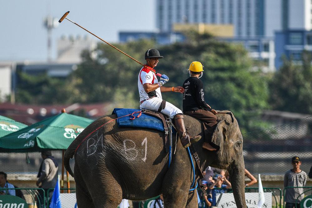 BANGKOK, THAILAND - MARCH 12: Mekhong on defense at the 2017 King's Cup Elephant Polo on March 12, 2017 at Anantara Riverside Bangkok Resort, Bangkok, Thailand. (Photo by: Naratip Srisupab/Thailand Photo SEALs Sports Photography)