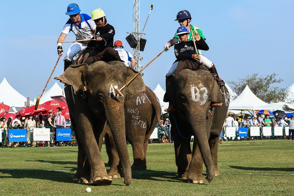 BANGKOK, THAILAND - MARCH 14: Team Arabian Knights vs Team Citi Bank at the 2017 King's Cup Elephant Polo on July 14, 2017 at Anantara Riverside Bangkok Resort, Bangkok, Thailand. (Photo by: Naratip Srisupab/Thailand Photo SEALs Sports Photography)