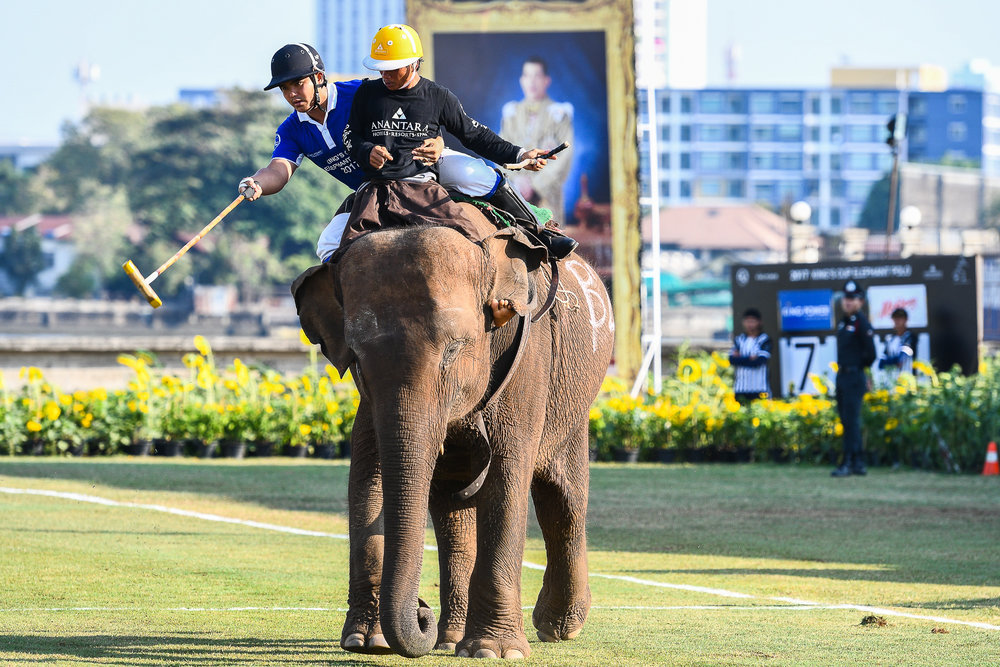 BANGKOK, THAILAND - MARCH 12: King Power in action at the 2017 King's Cup Elephant Polo on March 12, 2017 at Anantara Riverside Bangkok Resort, Bangkok, Thailand. (Photo by: Naratip Srisupab/Thailand Photo SEALs Sports Photography)