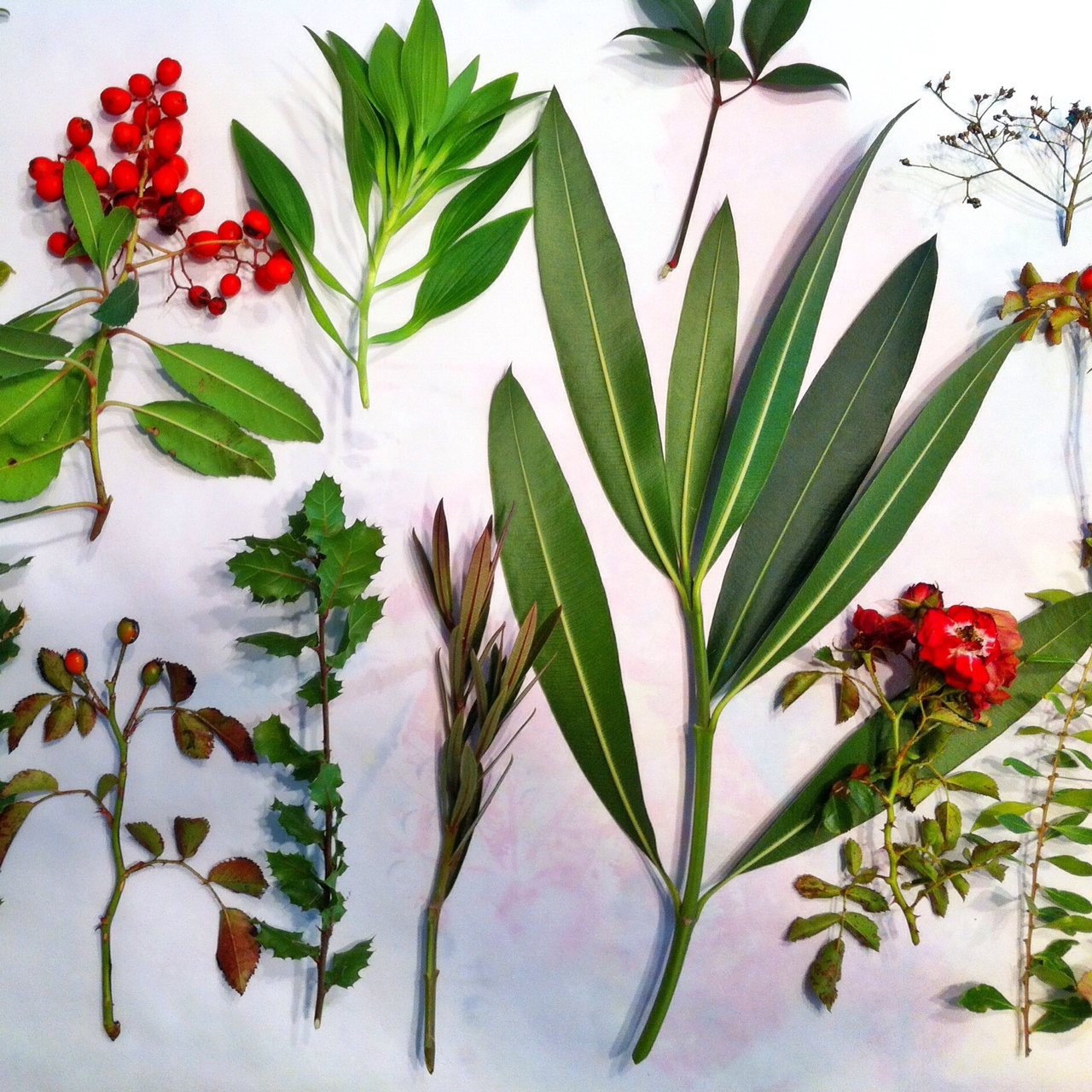From left: Manzanita, rose, oak, alstromeria, oleander, nandina, and upper right, a sprig of creeping hydrangea