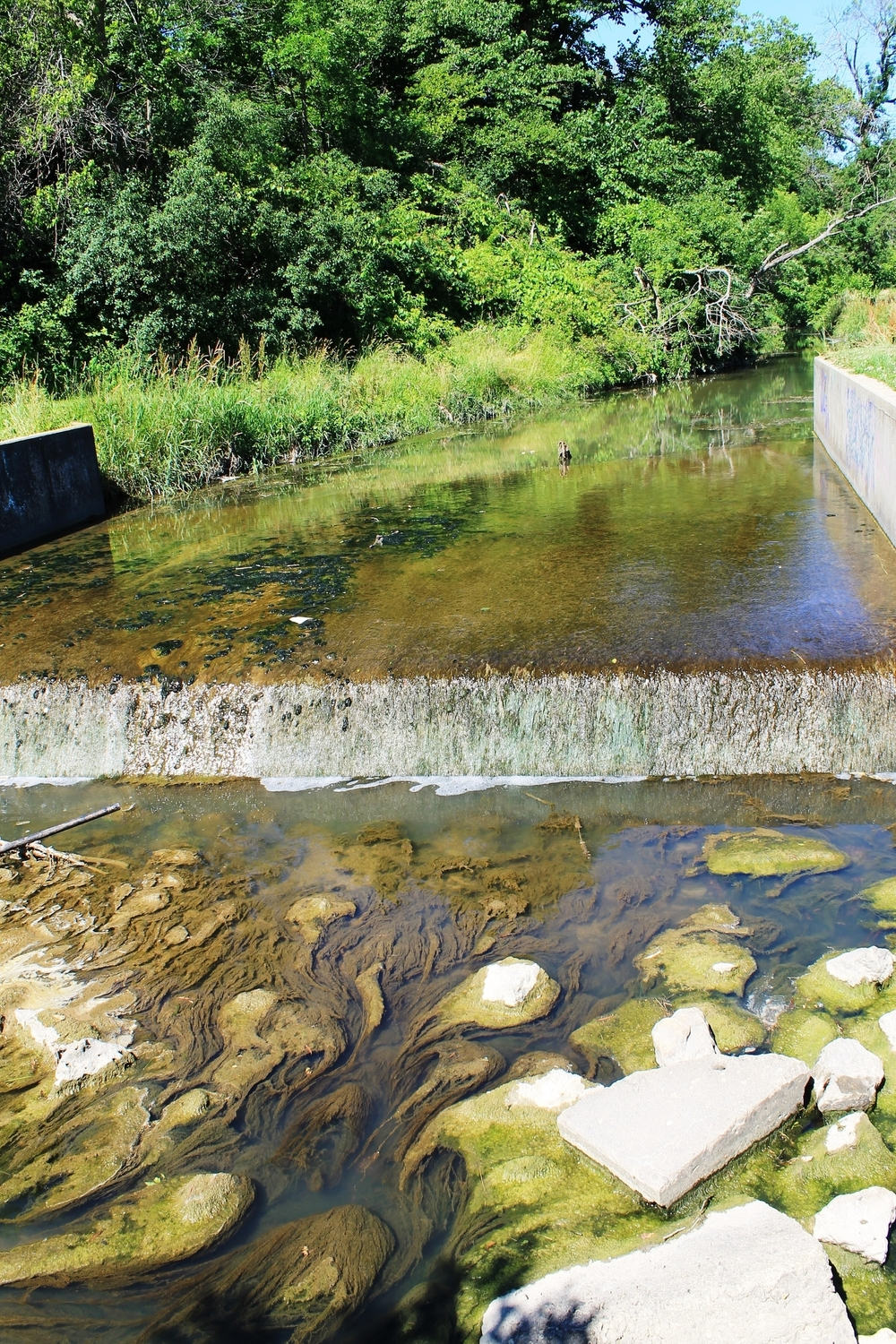 Fueled by phosphorus and nitrogen, algae overruns the Pike Creek in Kenosha.