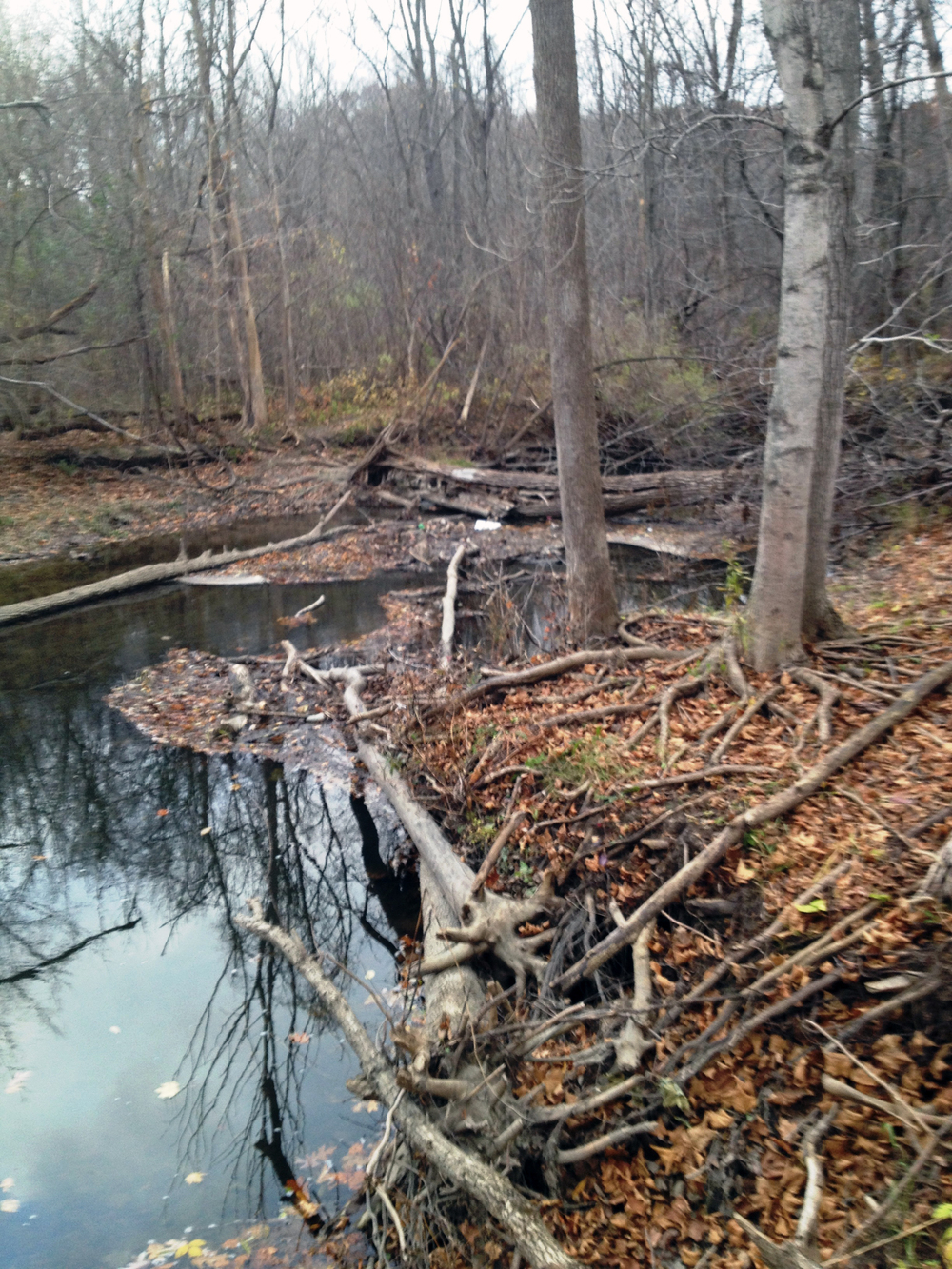 Stream channel erosion creating log jam on the Main Branch