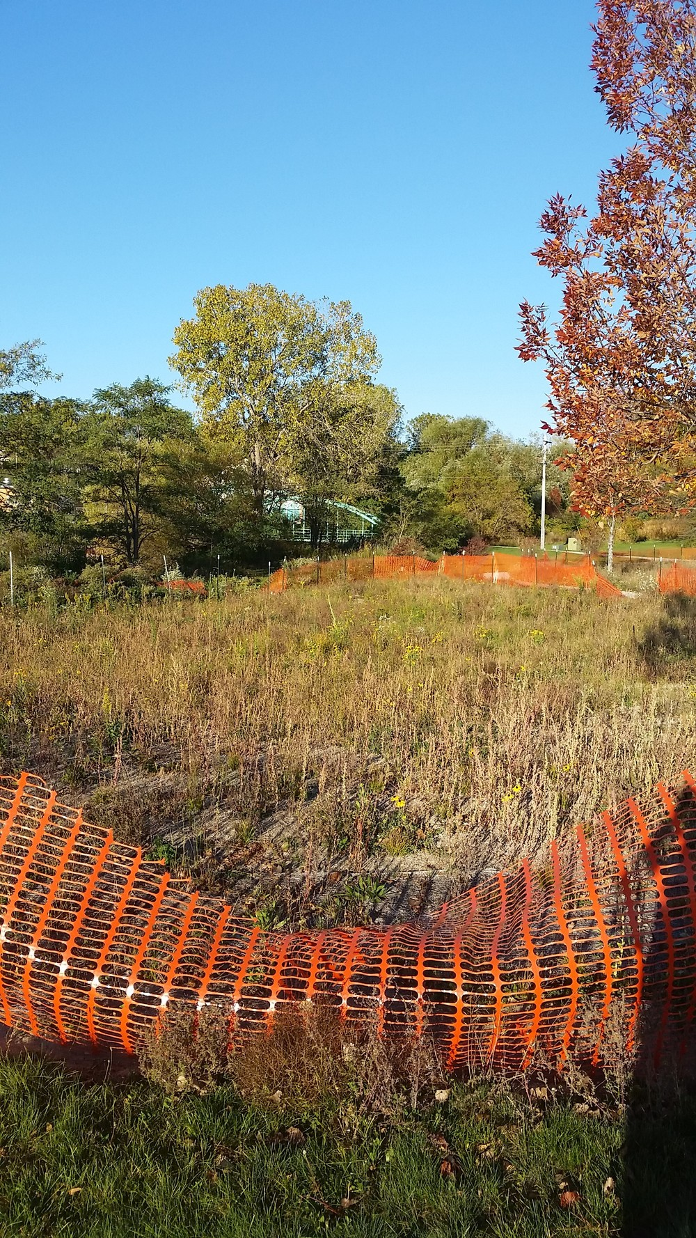 A large rain garden at Grant Park captures stormwater, creates habitat and helps maintain the biodiversity of native plant ecosystems.