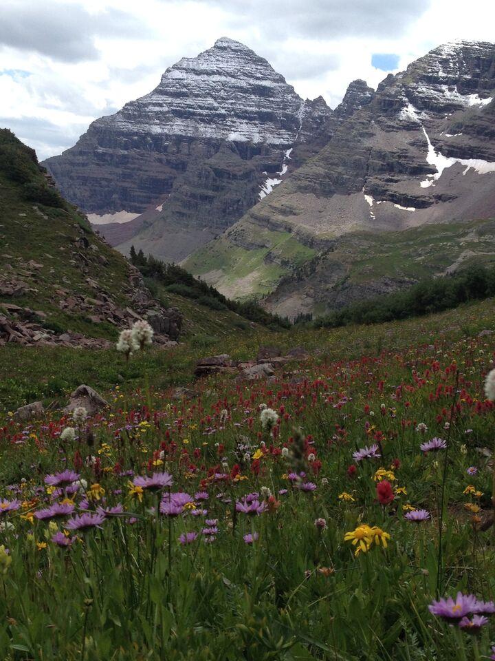 aspen flowers 2.jpg