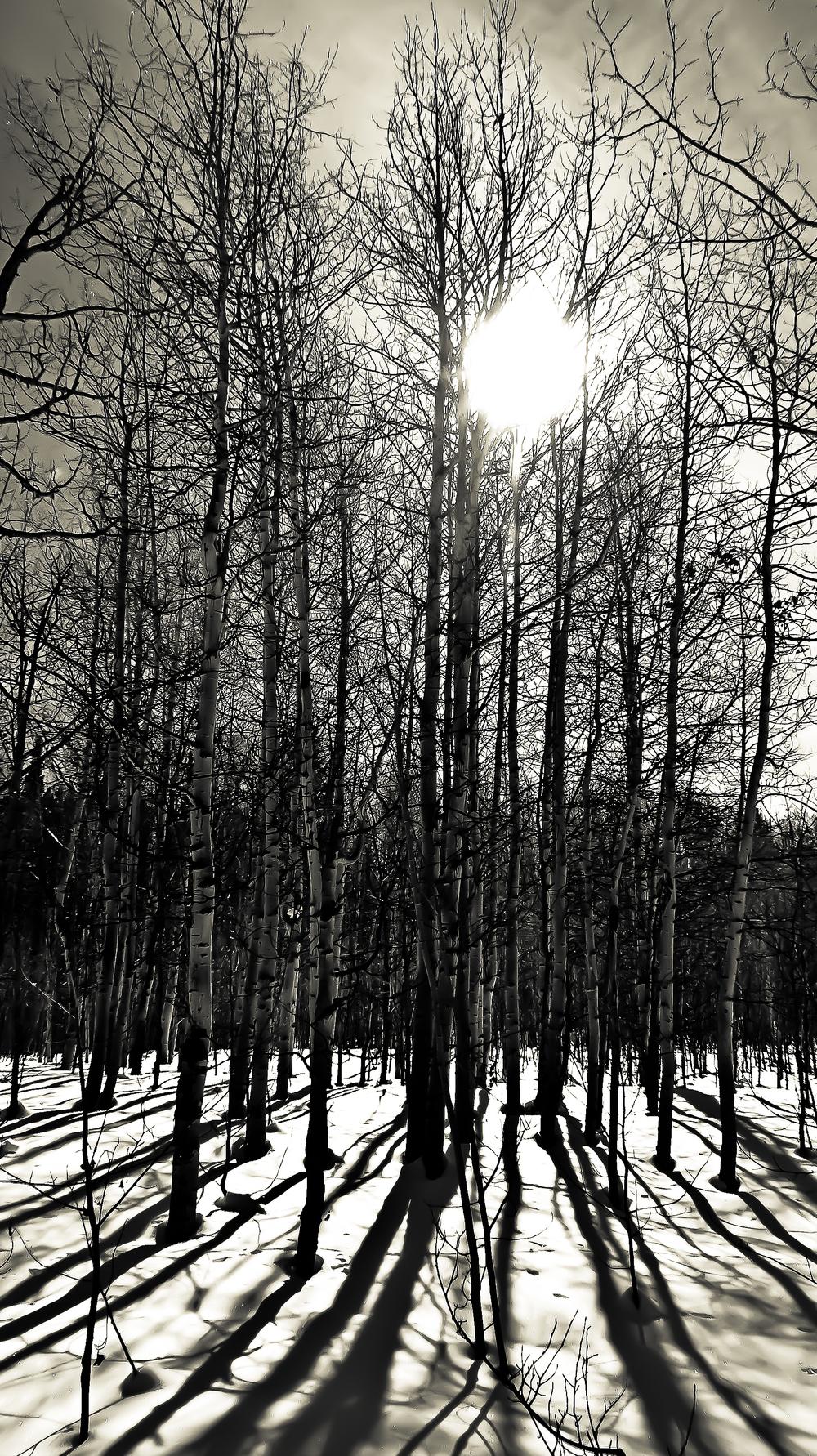 snowshoeing HC trail2.jpg