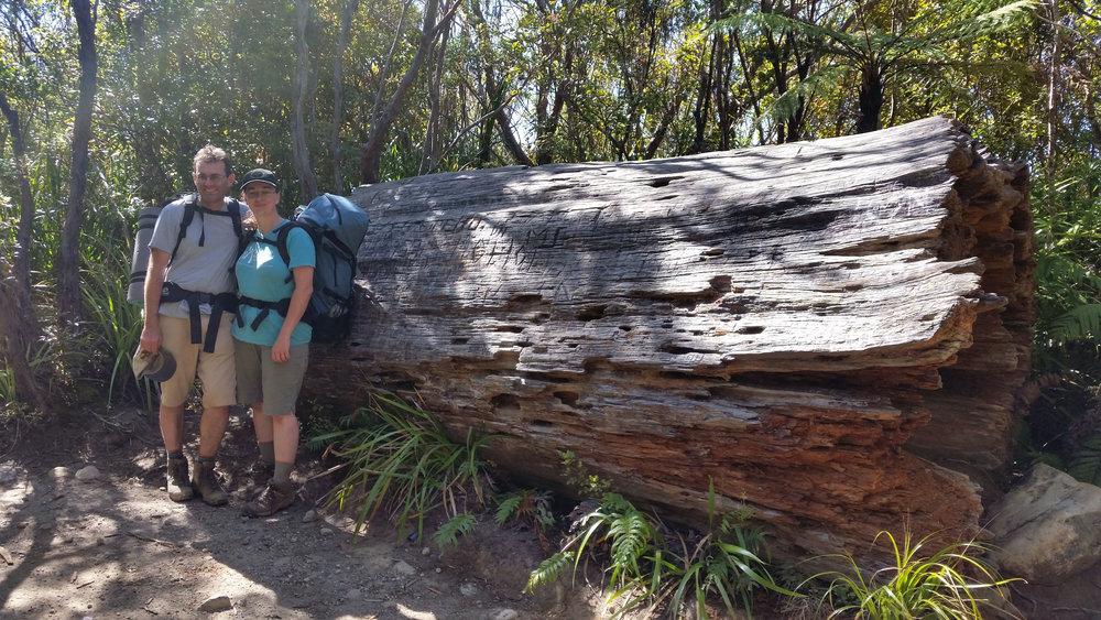 Old kauri log