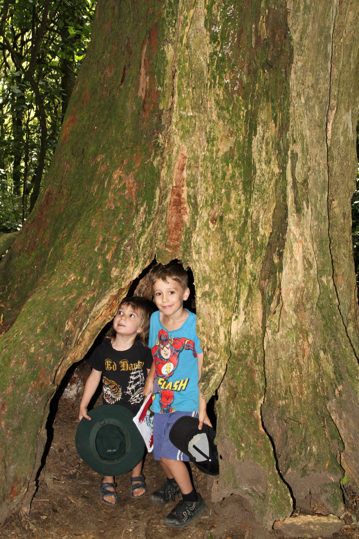 Inside a hollow totara tree.