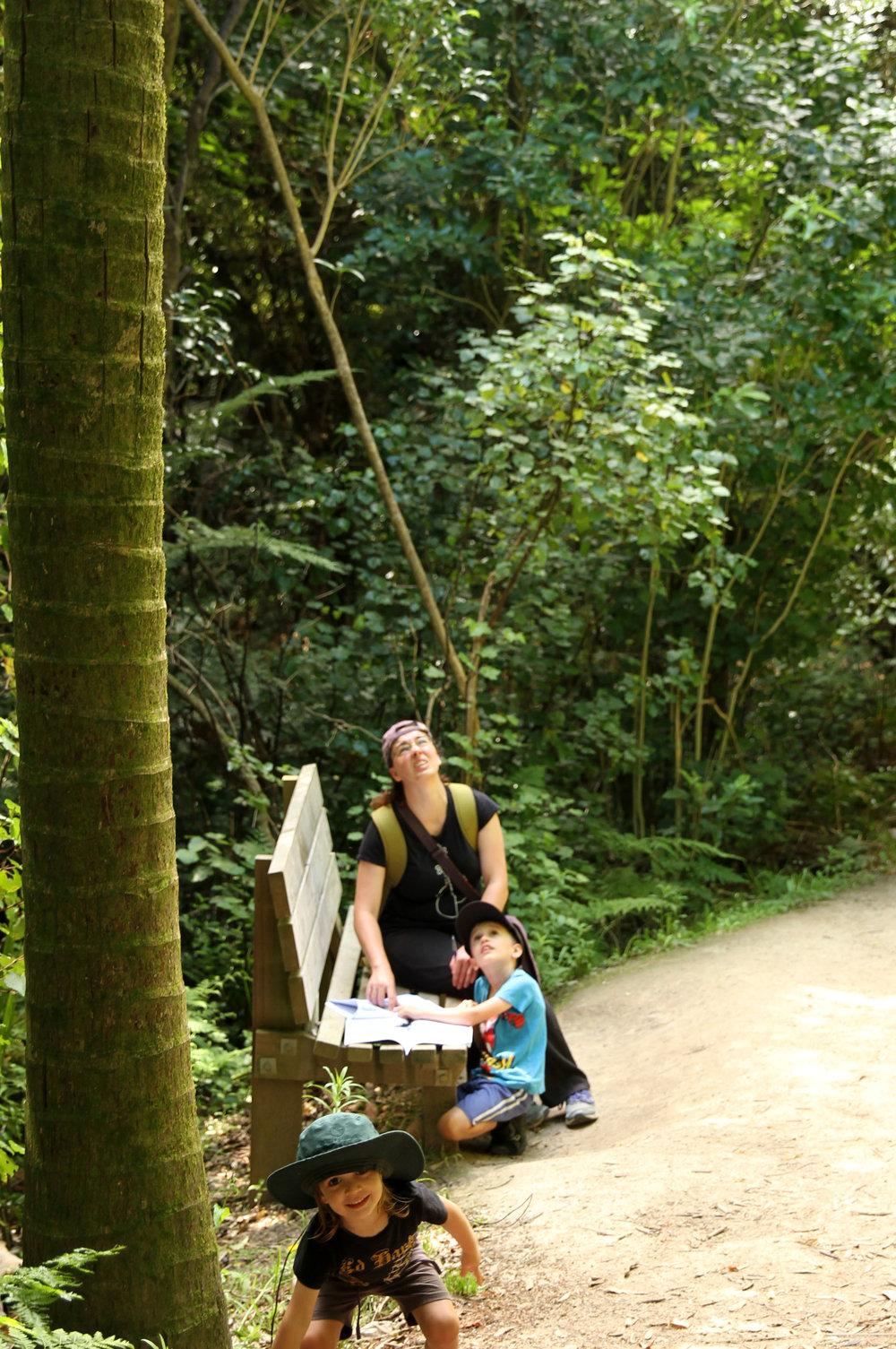 Completing the Nikau tree kiwi ranger activity.