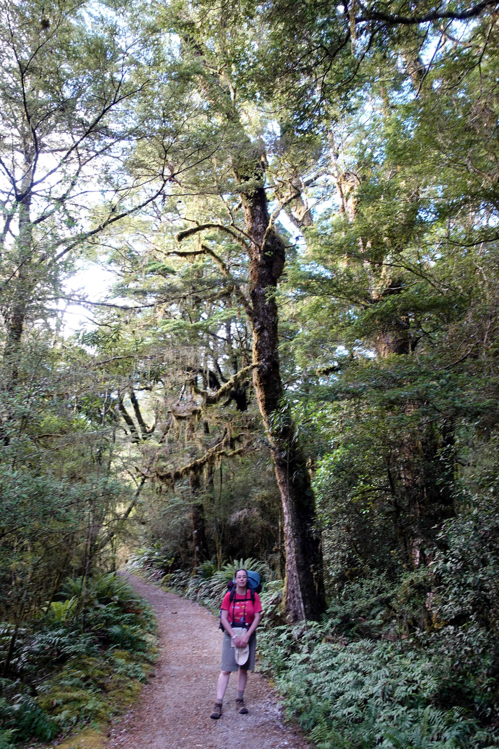 Julianne surronded by South Island Beech forest