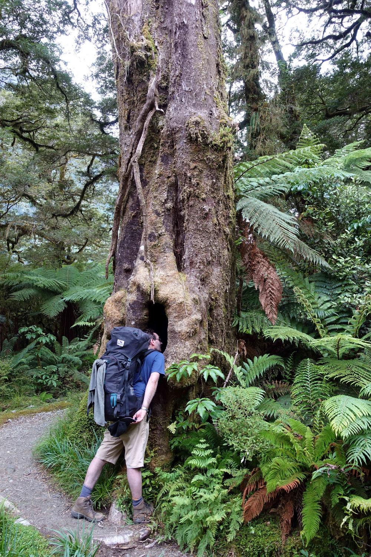 A tree I had to explore