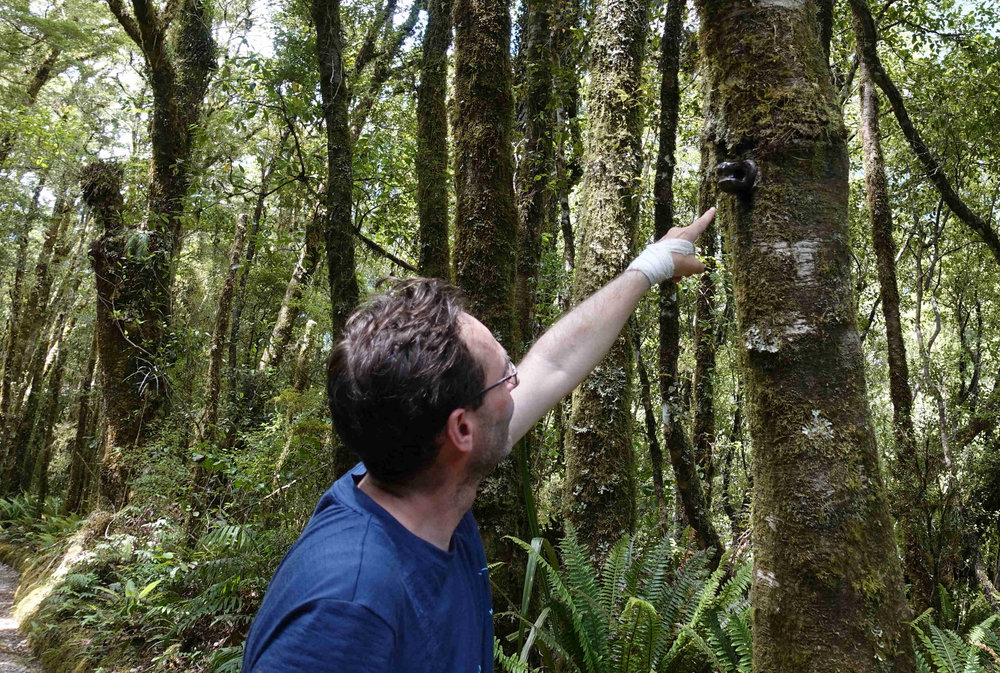 More evidence of the telephone line that used to run through the Milford Track