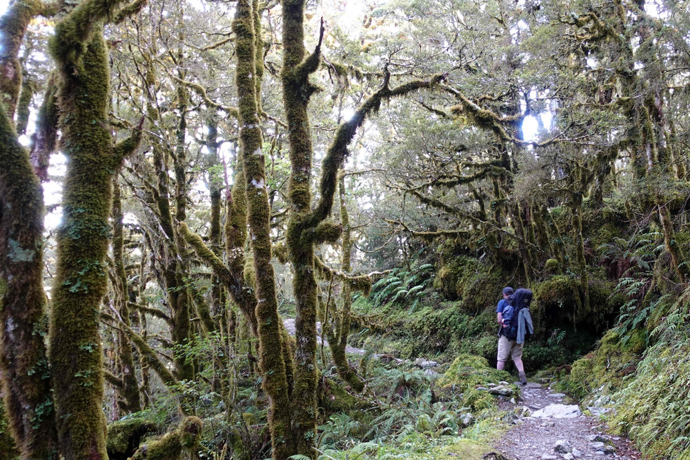 Me heading off from Lake Howden through the lovely beech forest.
