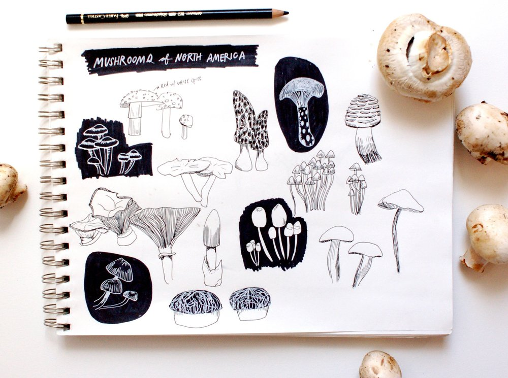 Sketchbook of mushrooms.jpg