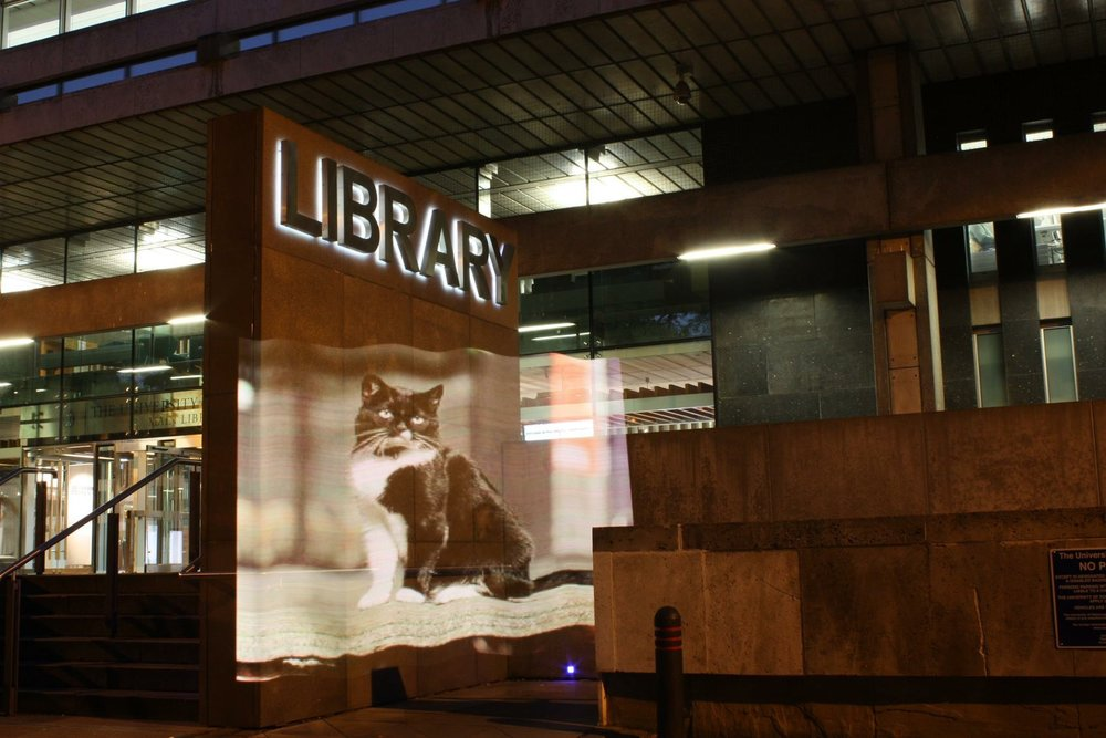 An image of University of Edinburgh's library cat (now lost and presumed dead though there is a successor kitten) which was taken as part of our Pixel Stick project using the Pixel Stick and long exposure.