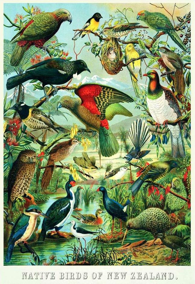 birdcrop.jpg