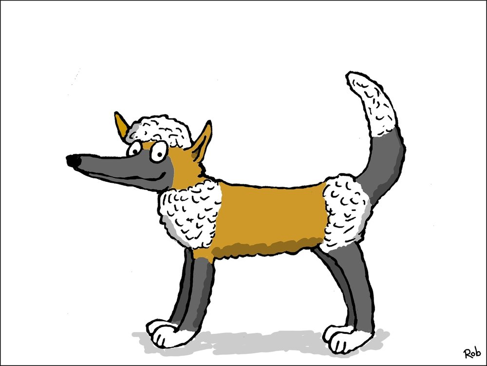 german-border-poodle-1
