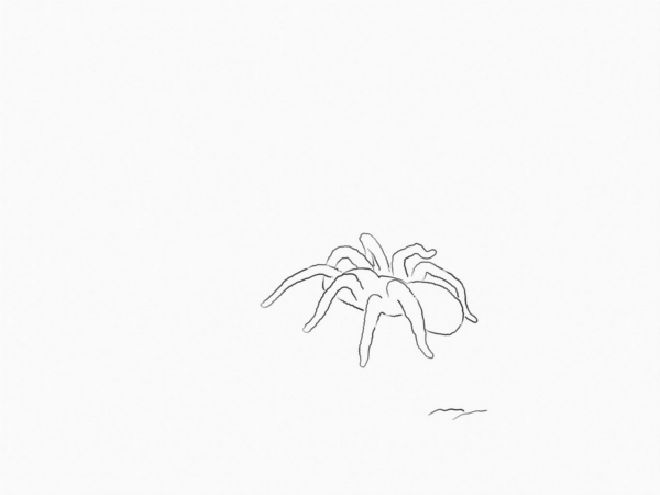 spider outline drawing