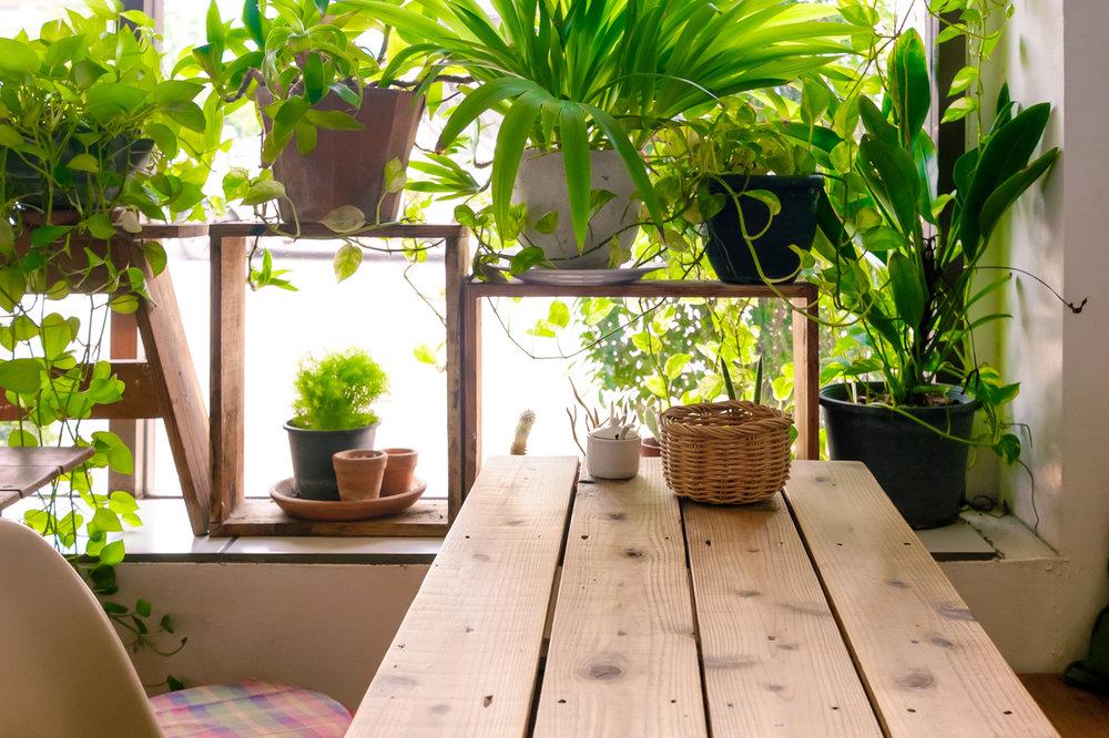 Plants - Blog Photo.jpg