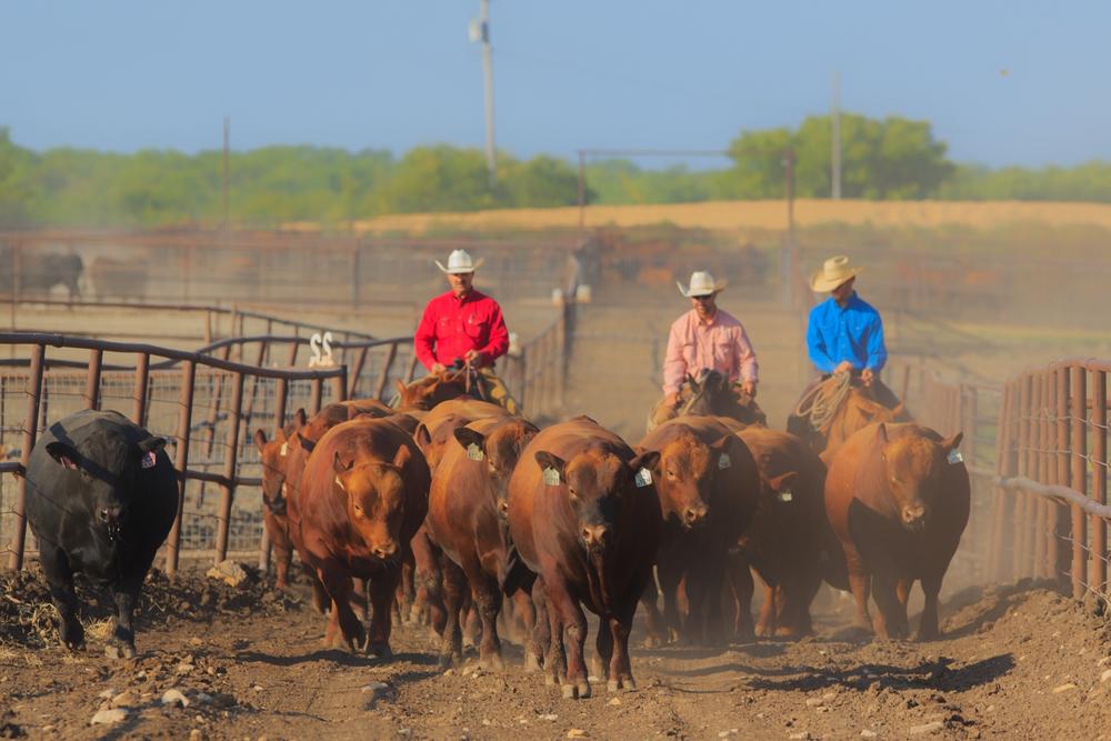 bull run-10.jpg