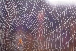 Spider-Web-300x199.jpg