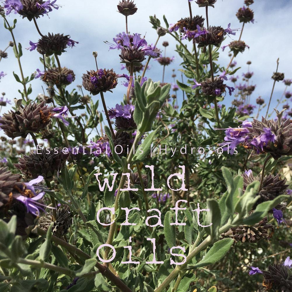 WILD CRAFT OILS - Hydrosols + Essential Oils - Encinitas, Ca.